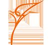 სილამაზის ცენტრი `Calla`